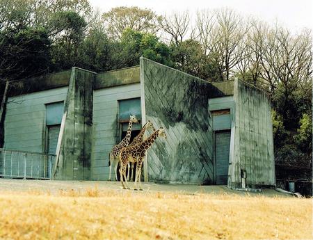 20110704_giraffe.jpg