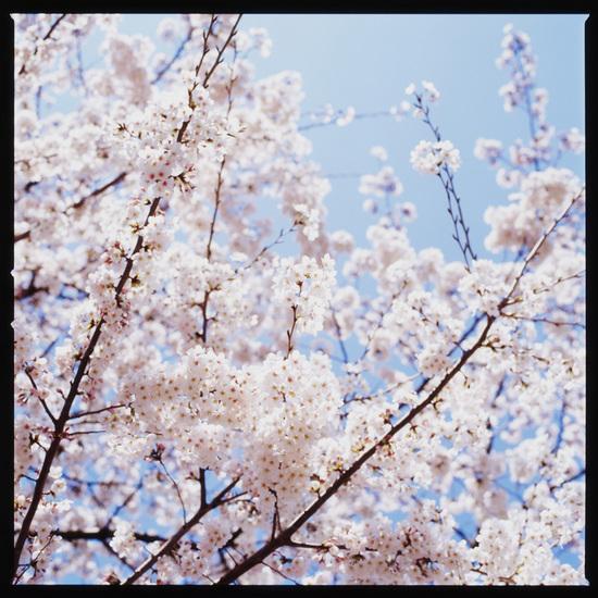 20120501_Yoshiro_Hasselblad.jpg
